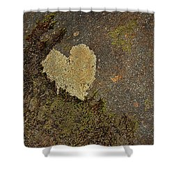 Shower Curtain featuring the photograph Lichen Love by Mike Eingle