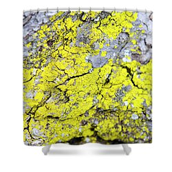 Shower Curtain featuring the photograph Lichen Pattern by Christina Rollo