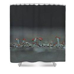 Lichen-scape Shower Curtain by JD Grimes