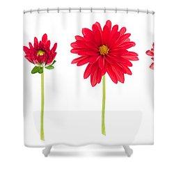 Life And Death Of A Dahlia Shower Curtain by Meirion Matthias