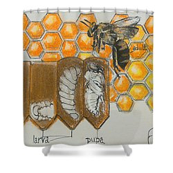 Life Cycle Of A Bee  Shower Curtain by Francine Heykoop