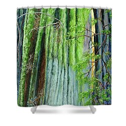 Life In A Redwood Forest Shower Curtain