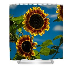 Shower Curtain featuring the photograph Life Of A Bumble Bee by Jason Moynihan