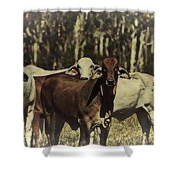 Life On The Farm V3 Shower Curtain by Douglas Barnard