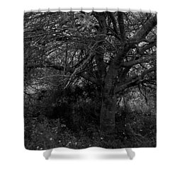 Life. Shower Curtain by Shlomo Zangilevitch