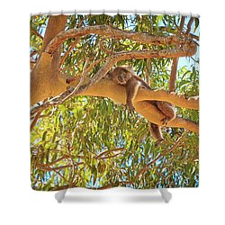 Life's Hard, Yanchep National Park Shower Curtain by Dave Catley