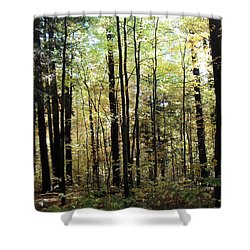 Shower Curtain featuring the photograph Light Among The Trees by Felipe Adan Lerma