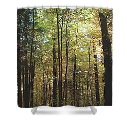 Light Among The Trees Vertical Shower Curtain by Felipe Adan Lerma