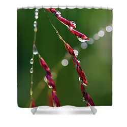 Shower Curtain featuring the photograph Light And Life by Kerri Farley