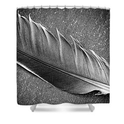 Shower Curtain featuring the photograph Light As A Feather by Karen Stahlros