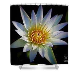 Light Blue Water Lily Shower Curtain