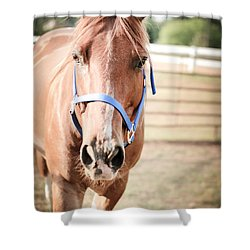 Shower Curtain featuring the photograph Light Brown Horse Named Flash by Kelly Hazel