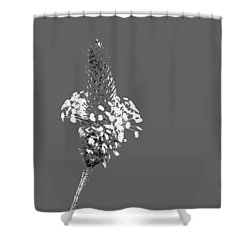 Light Grey Plantain Shower Curtain