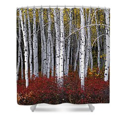 Light In Forest Shower Curtain