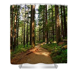 Shower Curtain featuring the photograph Light In The Forest by Lynn Hopwood