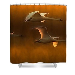 Shower Curtain featuring the painting Light by Kelly Marquardt
