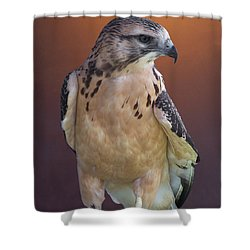 Light Morph Immature Swainsons Hawk Shower Curtain by Ernie Echols