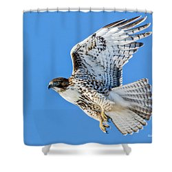 Light Morph Juvenile Red-tailed Hawk Shower Curtain by Stephen Johnson