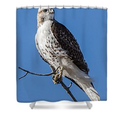 Shower Curtain featuring the photograph Light Morph Red-tailed Hawk by Stephen Johnson