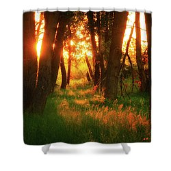 Shower Curtain featuring the photograph Light Of The Forest II by John De Bord