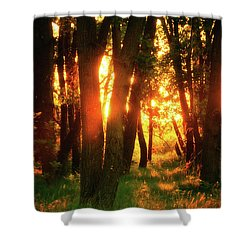 Shower Curtain featuring the photograph Light Of The Forest by John De Bord