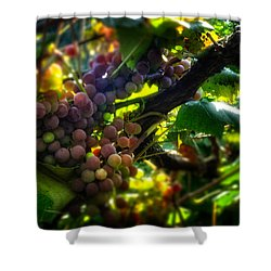 Light On The Fruit Shower Curtain