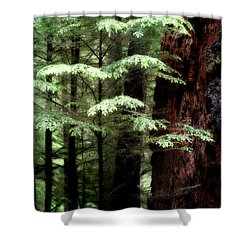 Light On Trees Shower Curtain