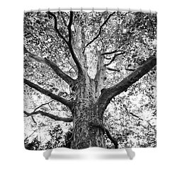Light, Shadows And Texture Shower Curtain by Karen Stahlros
