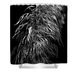 Shower Curtain featuring the photograph Light Shadows by Eric Christopher Jackson
