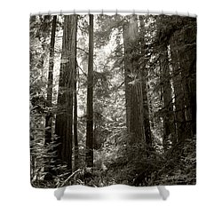 Light Through Redwoods Shower Curtain