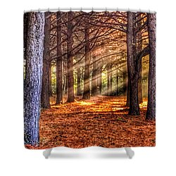 Light Thru The Trees Shower Curtain