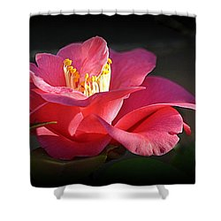 Shower Curtain featuring the photograph Lighted Camellia by AJ Schibig