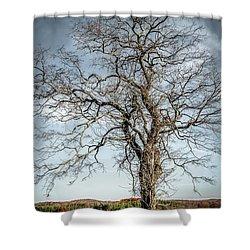 Lightning Tree Shower Curtain