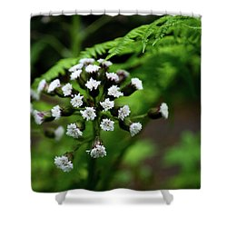 Shower Curtain featuring the photograph Lights Amid The Green by Erin Kohlenberg