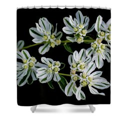 Lights In The Darkness Shower Curtain