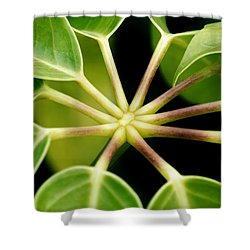 Shower Curtain featuring the photograph like a Star by Werner Lehmann