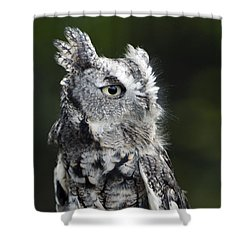 Shower Curtain featuring the photograph Li'l Screech by Stephen Flint