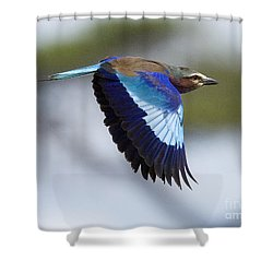 Lilac-breasted Roller-signed Shower Curtain
