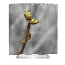 Lilac Bud Season Shower Curtain by Aliceann Carlton