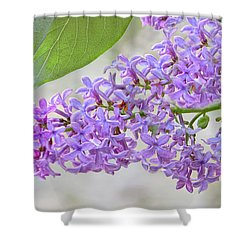 Lilac Cluster Shower Curtain