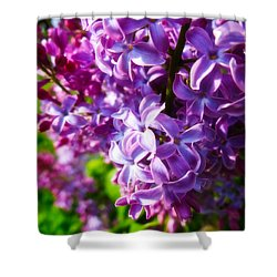 Lilac In The Sun Shower Curtain