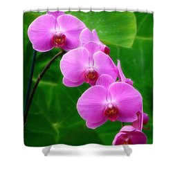Lilac Orchid Beauties Shower Curtain by Sue Melvin