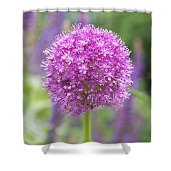 Lilac-pink Allium Shower Curtain by Rona Black