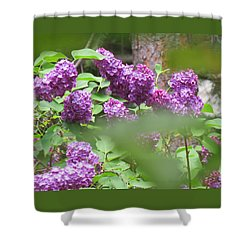 Shower Curtain featuring the photograph Lilacs In The Rain 2 by Brooks Garten Hauschild