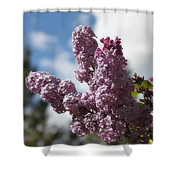 Lilacs 5547 Shower Curtain