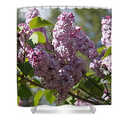 Lilacs 5548 Shower Curtain