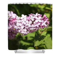 Lilacs 5550 Shower Curtain