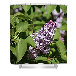 Lilacs 5551 Shower Curtain