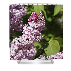 Lilacs 5552 Shower Curtain