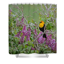 Lilacs And Yellowhead Blackbirds Shower Curtain